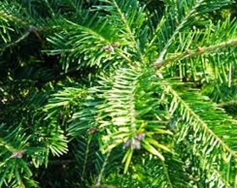 2lbs Dried Balsam Fir Needles Adirondack Bulk Loose Cut Up, Wild Harvested USA Grown Traditional Christmas Tree Fragrance Pillow Sachet 1kg