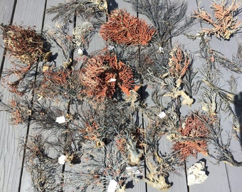 Bulk Black Sea Fan, A box of Reef Coral Decoration