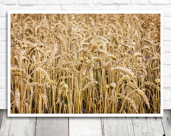 Wheat Print, Golden Wheat Photo, Wheat Picture, Wheat Field Print, Printable Photo, Digital Print, Instant Download, Printable Wall Art