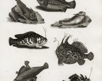 Fish Engraving decorative art wall art kitchen decor original print Ocean sea life natural history nature print