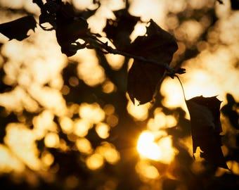 Napa Leaves