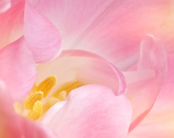 Flower Photography, Tulip, Macro, Pink, Dreamy, Fine Art print, Home Decor.