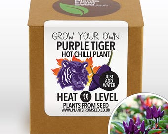 Grow Your Own Purple Tiger Chilli Plant Kit