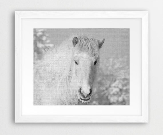 Wall Art Black Horse : Horse print wall art black and white photography wild
