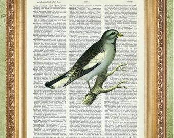 Bird on Branch Dictionary Art Prints Wall Art Bird  Art Prints Bird Decor Botanical Art Bird Wall Art Bird Prints