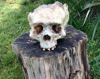 Neanderthal Homo Sapien Hybrid Skull Sculpture
