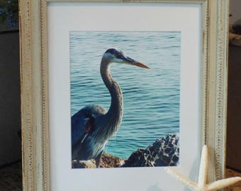 bird photography blue heron 14 x 17 frame aqua home decor coastal wall art beach decor shabby chic decor beach picture frame spring