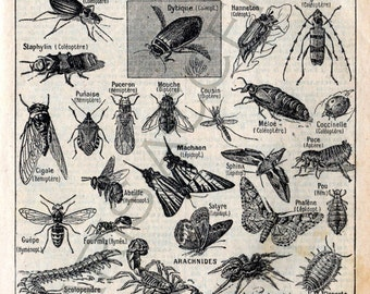 Instant digital download of 'Arthropodes', from 'Nouveau Petit Larousse Illustré, a French Encyclopedia. Useful teaching aid, Dated 1952