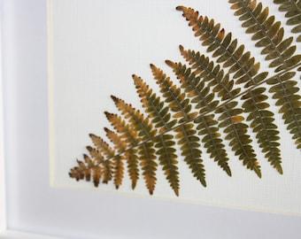 Pressed Fern Botanical Frame