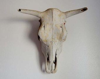 Vintage Cow Skull