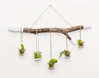 Terrarium hanging hand dipped tree branch hanger