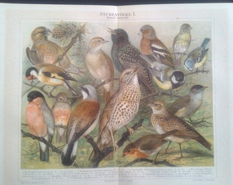 "Chromolithograph, ""Exchange birds I."""