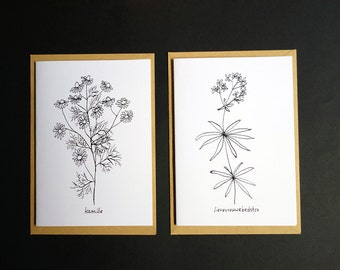 Card with black and white illustration of Camomile and Lady Woodruff. Folded, blank inside, with envelope.