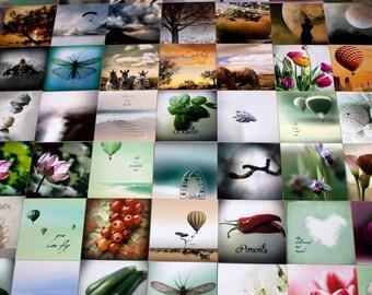 Photography on 4x4 wood frame, photo Choice Nature, Flowers, Landscape, Shell, Beetles, Cactus, Sea, Travel, Pets, Arts