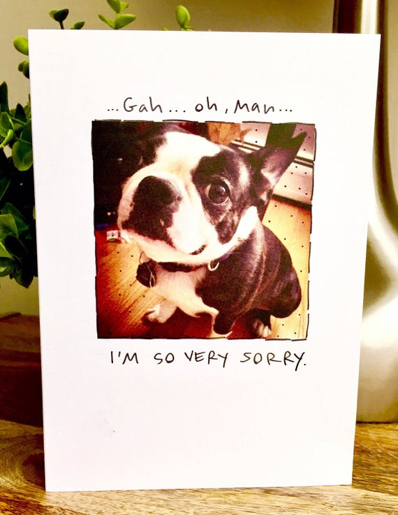 boston terrier card, boston terrier im sorry card, dog sorry card, sorry card, dog sympathy card, sorry you lost a pet