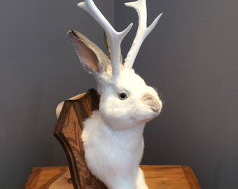 taxidermy jackalope white and gray
