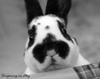 Instant Digital Download: Bunny Photograph (Black & White) 8x10