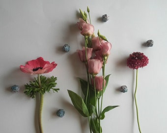 Summer sunshine seedbombs, summer flowering flowerbombs