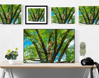 Tree, digital download, instant, summer, nature print, leaves, green prints, blue, wall art, home decor, photo, photography