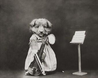 Puppy Plays Cello Photo, Nursery Art, Nursery Room, Baby Gift, Animal Photos, Black White Photography, Anthropomorphic Animals, Sepia Photo,