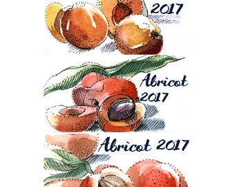 Apricot Jam Labels, apricot stickers, canning labels customizable, apricot jam, handmade stickers, watercolor labels, cans labels, stickers