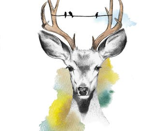 Oh Deer - Illustration - Limited Edition A3 Print