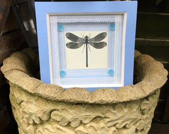 Lace Dragonfly Box Frame Photo