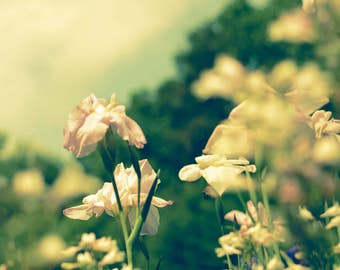 Dreamy Photography - Feminine - Summer Art - Bohemian - Nature Photography - Green Nature Print - Wild Flower Print - Cottage Chic Decor