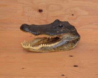 Vintage Alligator Head Large Genuine Louisiana Alligator Head Vintage Taxidermy Unique Decor