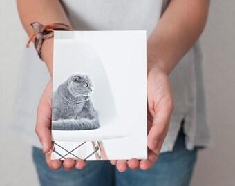 Photo Postcards, Art Postcards, beautiful grey cat, Funny Postcards, Fun prints, Postcards, Gratitude postcard, Friendship card, Photography