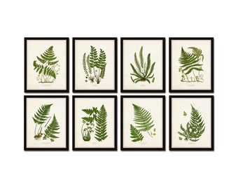 Vintage Ferns Print Set No. 34, Giclee, Botanical Art, Botanical Print Set, Vintage Fern Prints, Illustration, Vintage Botanicals, Art Print