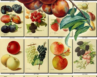 FRUITS VEGETABLES-34 Collection of 211 vintage images Loquat Plum Peach Raspberry Mango pictures High resolution digital download printable