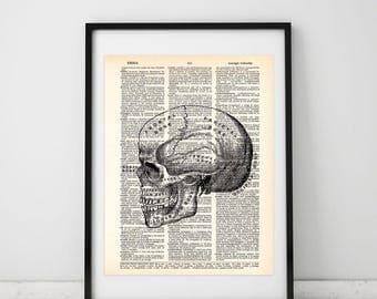 Skull Vintage Illustration Dictionary art print - Upcycled dictionary art - Book print page art #078