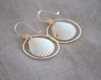 Hawaiian White Scallop Shell Hoop Earrings, Gold Filled