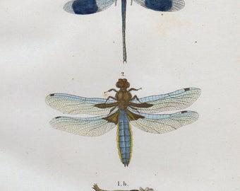 Vintage Insect Print Dragonfly Print 1854 Antique Bug Print Entomology