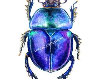 Beetle watercolor-Trypocopris vernalis