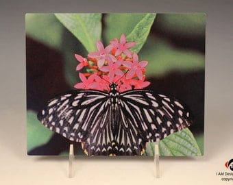 Zebra Butterfly with Pink Flower on Brushed Aluminum