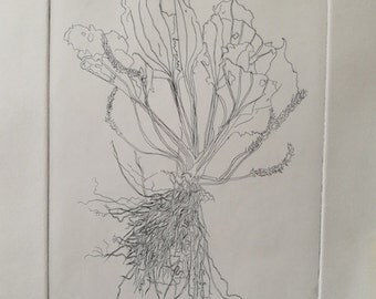 Drypoint Print - Plantain - Hand Pulled