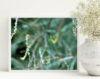 Emerald decor - floral print - green bedroom decor - Bedroom prints, PRINTABLE, Nature, Photography, 8x10 print, downloadable prints, wall