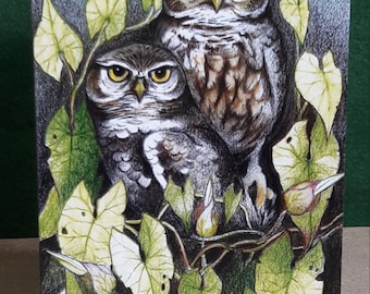Greeting cards, owl cards, little owl cards, bird cards, wildlife cards, birthday cards, original art cards, quality silk finish cards