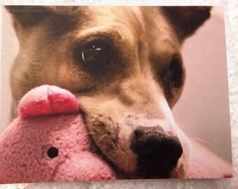 Sweet Puppy Dog Eyes Dog Notecard - Profits Donated to Sunny Sky's Animal Rescue