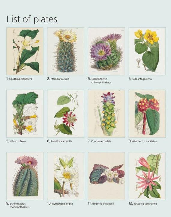 Kew Garden Botanical Art Coloring Book Green