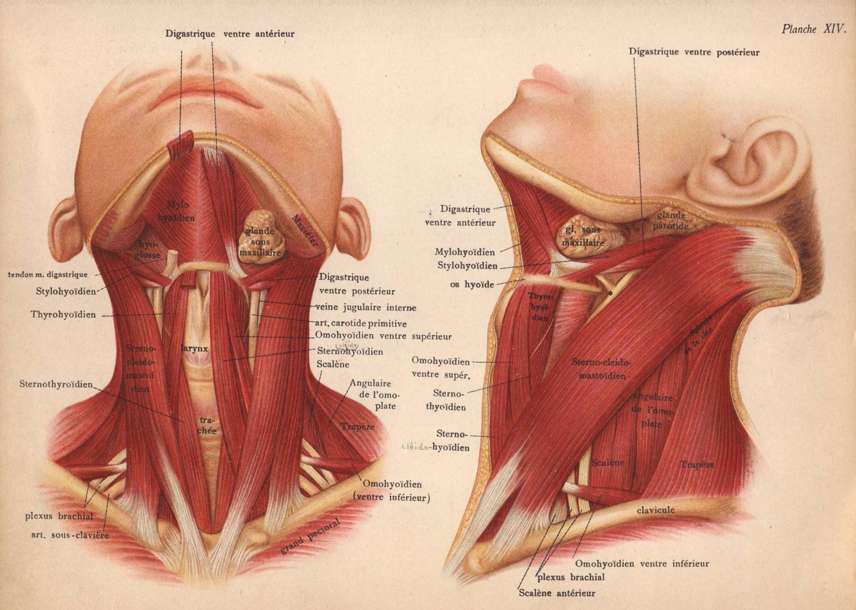 Wunderbar Menschliche Anatomie 6. Auflage Zeitgenössisch ...