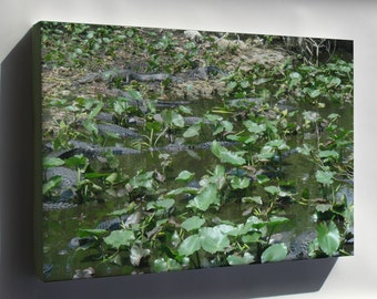 Canvas 24x36; Alligators At Shark Valley Picture 213