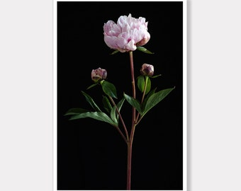 Peony Photo Print, Flower Photo Print, Printable, Photo Decor, Modern Photo Art, Instant Digital Download, Photo Download