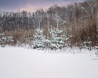 Snowy Field, Photography Backdrop, New England, Digital Download, Winter Background, Evergreen Backdrop, Photoshop Background, Snow Covered