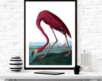 Flamingo by John James Audubon, birds of america, vintage flamingo art, home decor, Birds,