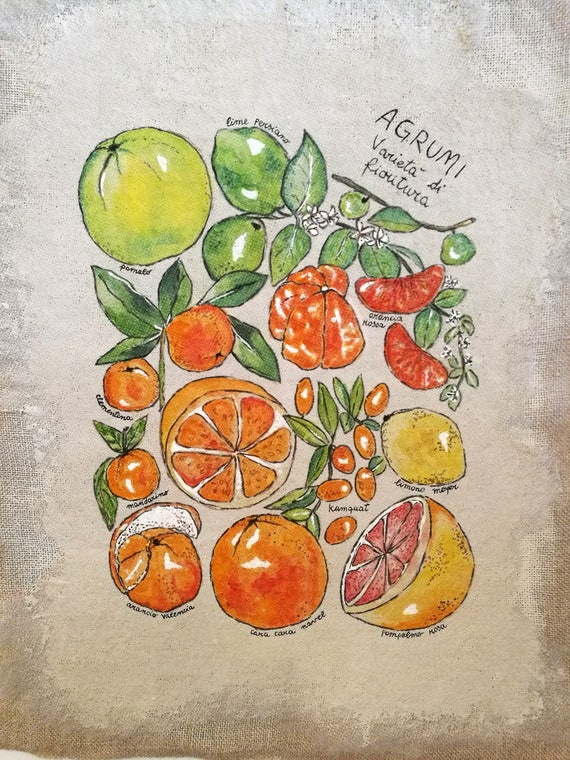 Acrylic painting, painting on canvas, free canvas, hand painted, fruit painting, Custom art, gift Idea, birthday gift-illustrated Citrus