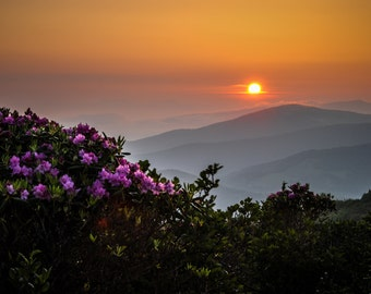 Rhododendron Sunrise
