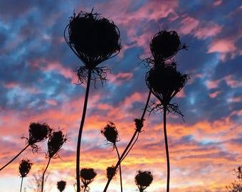 Rural Kentucky Sunset Silhouette Flower Landscape Colorful Original Photograph Square Print